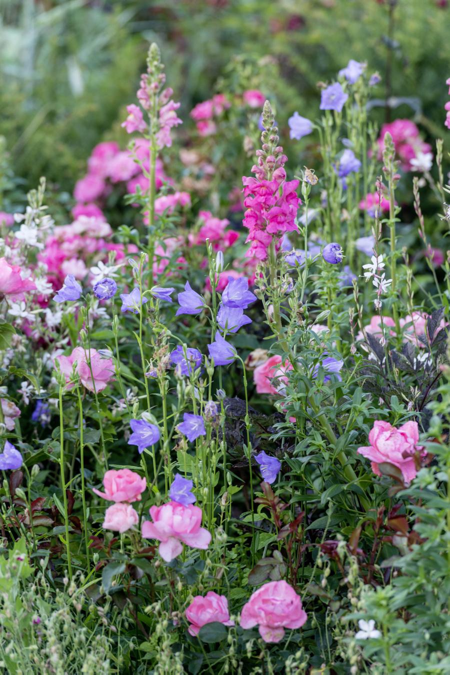 Ferdinand Graf Luckner Buch Der Neue Rosen Garten 003