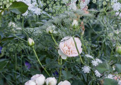 Ferdinand Graf Luckner Buch Der Neue Rosen Garten 014