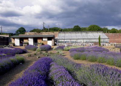 Downderry Nursery