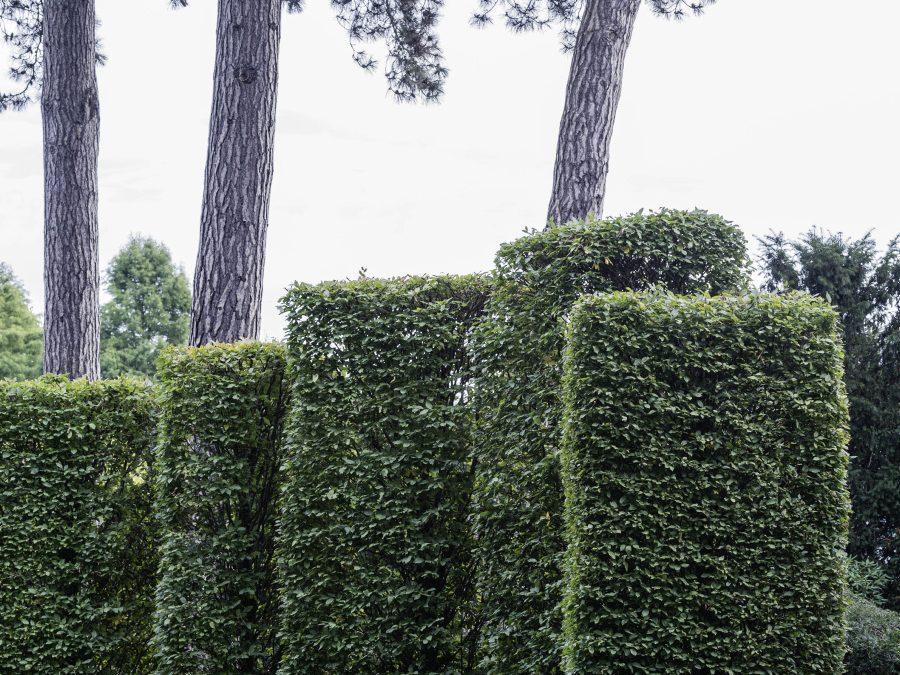 Hamburgs geheime Gärten