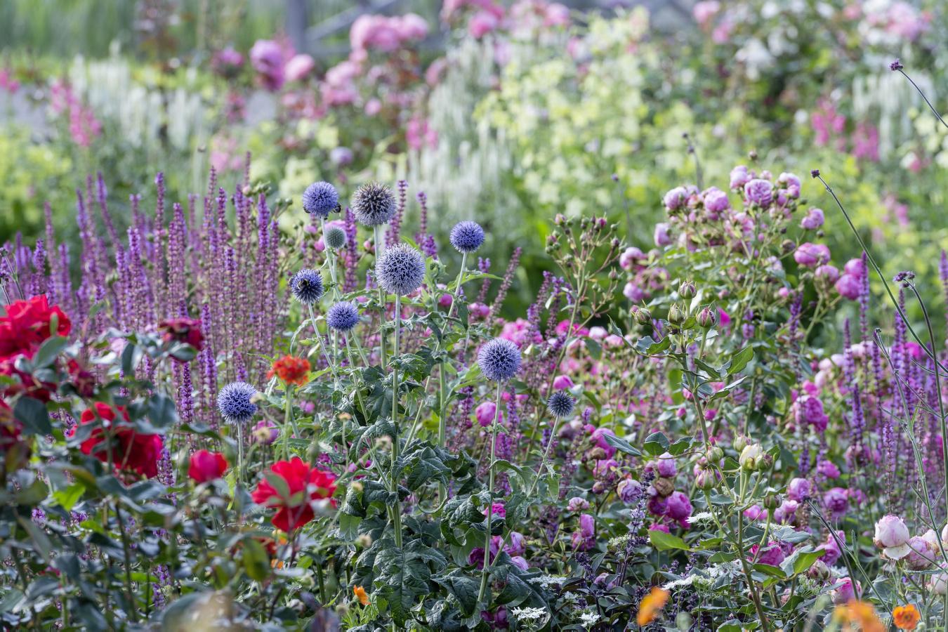 Ferdinand Graf Luckner Buch Der Neue Rosen Garten 011