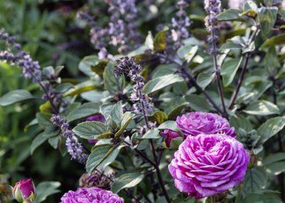 Ferdinand Graf Luckner Buch Der Neue Rosen Garten 013