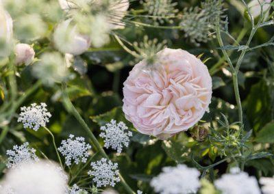 Ferdinand Graf Luckner Buch Der Neue Rosen Garten 019